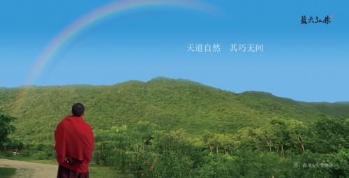 不为人知的禅修秘境——蓝天弘林海南黄花梨共享庄园